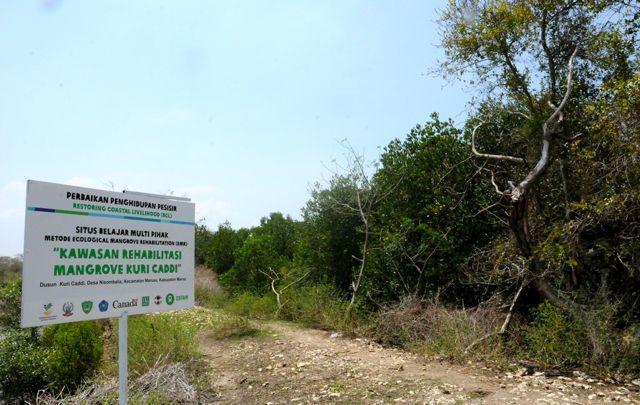 Kala Tailing Freeport Rusak Ekosistem Mangrove Mongabay Id Belajar Bersama