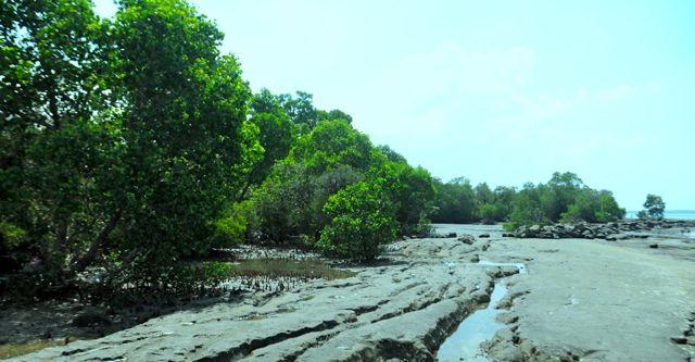 Kala Tailing Freeport Rusak Ekosistem Mangrove Mongabay Id Foto Eko