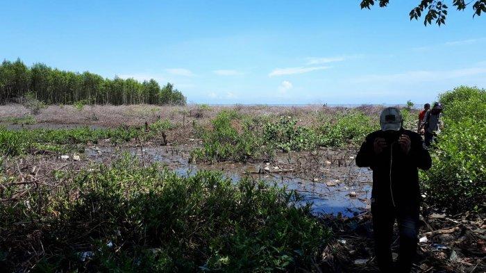 Mangrove Pantai Kuri Lompo Dibabat Reaksi Legislator Sulsel Wawan Mattaliu