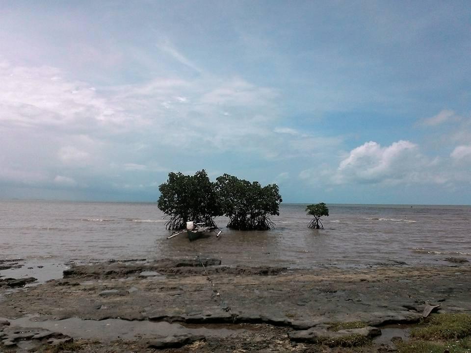 Menulis Pantai Kuri Pohon Bakau Caddi Kota Makassar