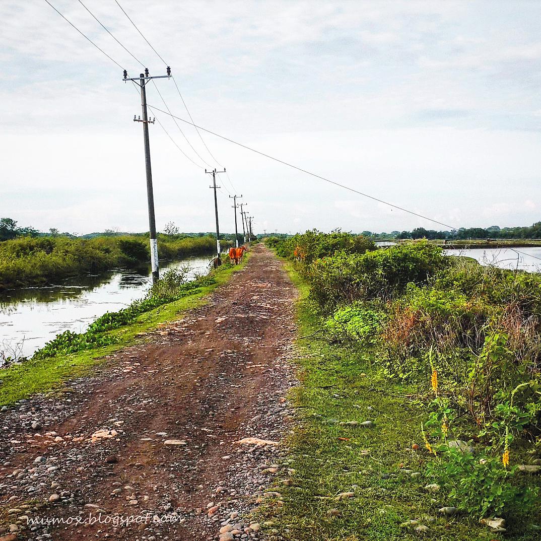 Mumox Sepedamalas Kuri Caddi Sampai Lompo Sempat Tersesat Ternyata Pantai