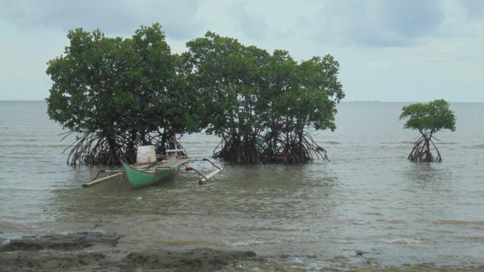 Pantai Kuri Terjamah Oleh Fachrul Khairuddin Kompasiana Perahu Ditambatkan Pohon