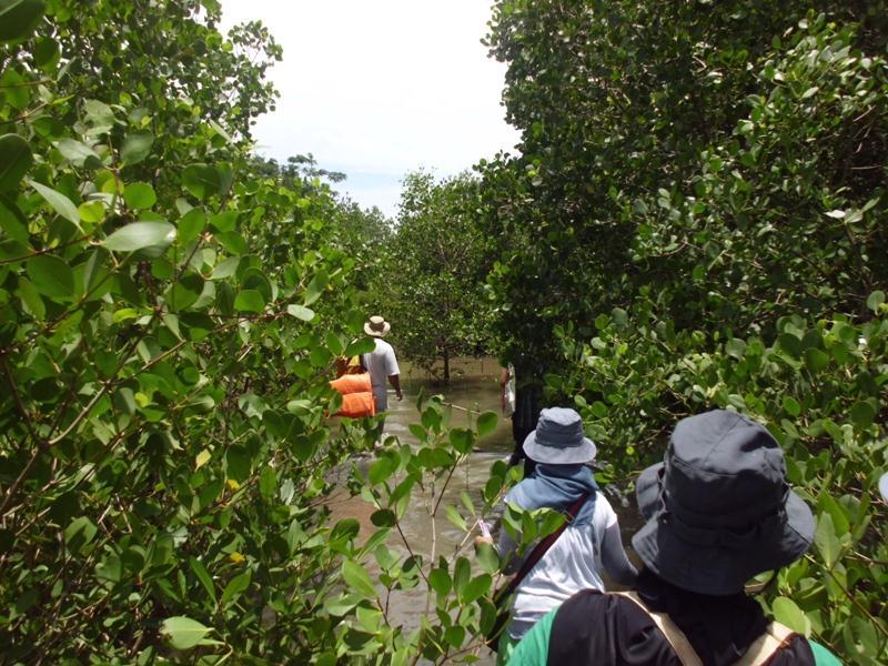 Sumberdaya Perairan Indonesia Berjaya Kuri Caddi Daerah Mangrove Dusun Bagian