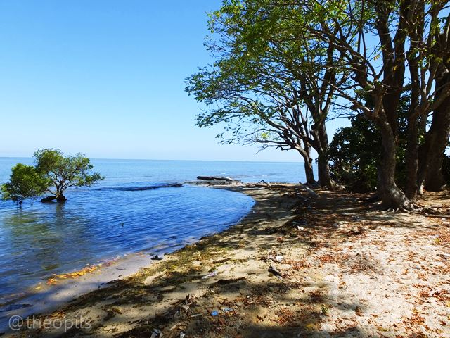 Tulisan Gambar Foto Menjemur Rumput Laut Kuri Caddi Pantai Kota