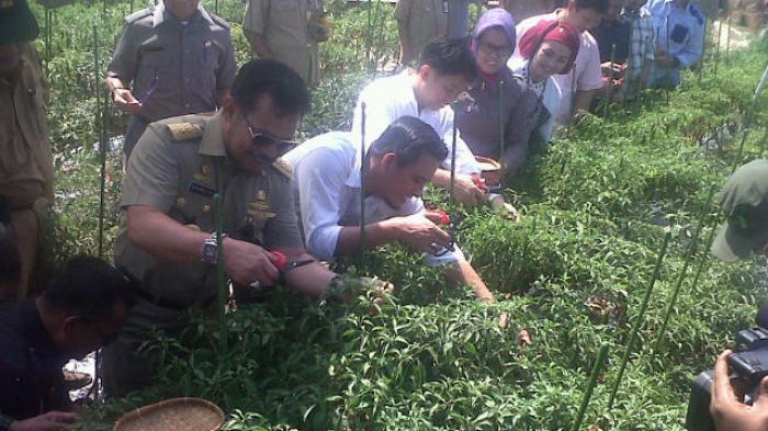 Gubernur Sulsel Panen Kebun Maccini Sombala Indonesia Tribun Taman Kota