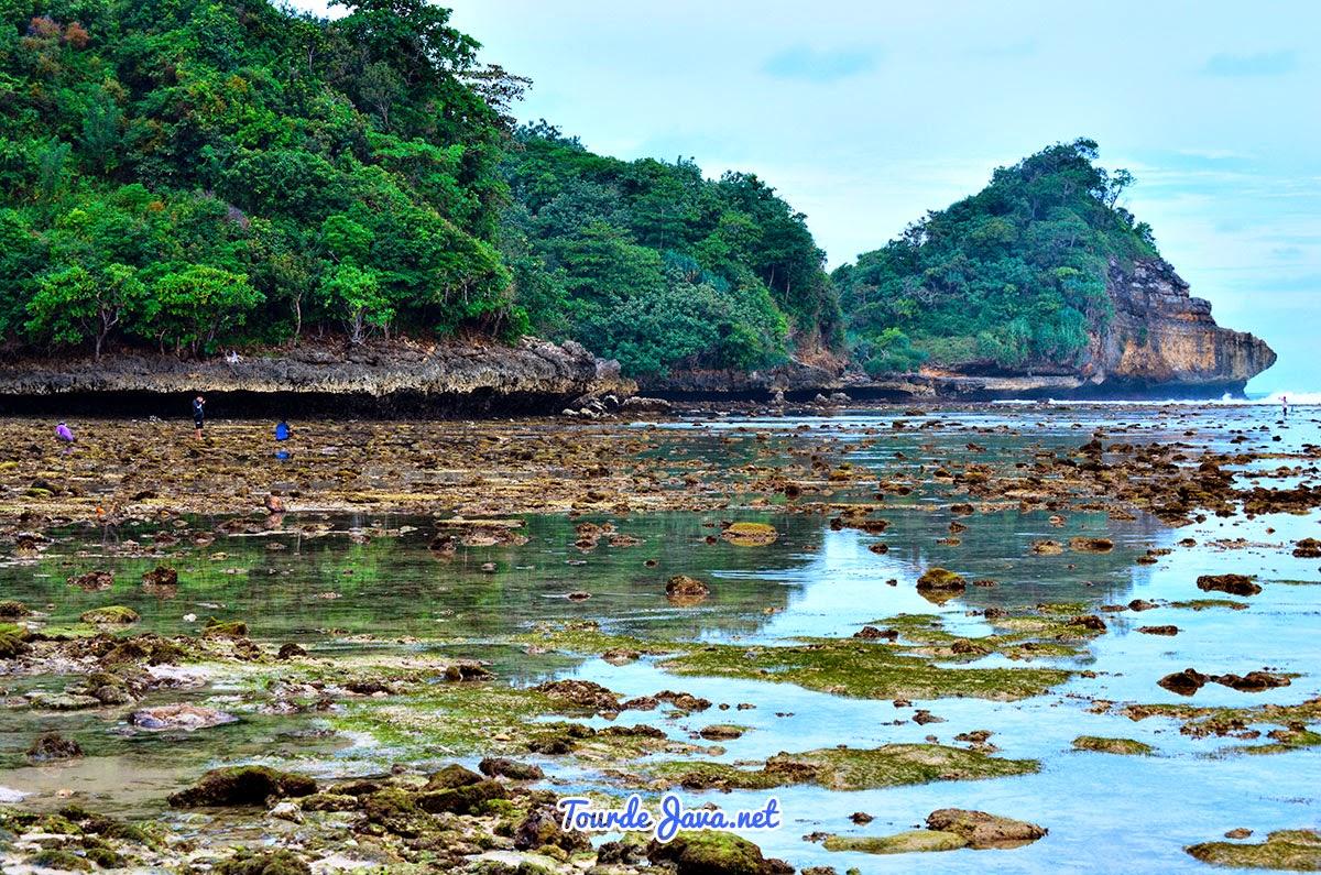 Clungup Mangrove Conservation Pantai Indah Tersembunyi Batu Karang Menuju Gatra