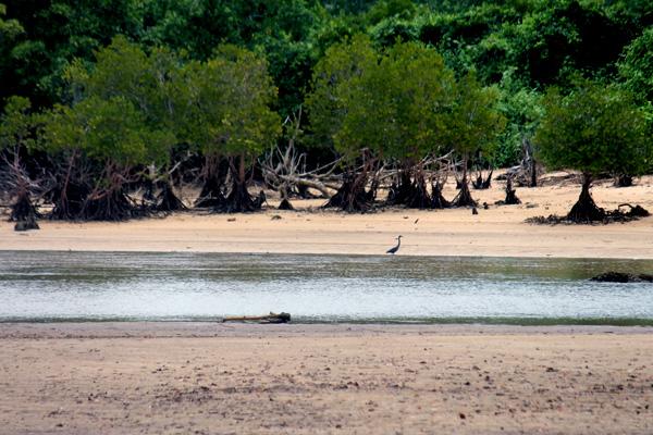 Mangrove Pantai Clungup Hijau Mongabay Id Kota Malang