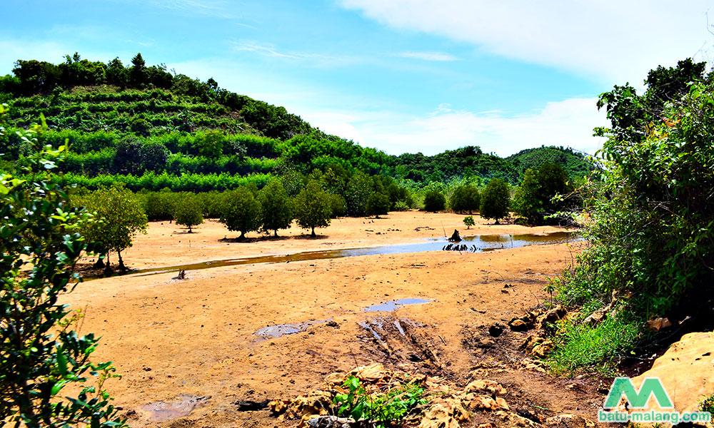 Pantai Clungup Giatkan Semangat Konservasi Mangrove Wisata Batu Malang Selatan