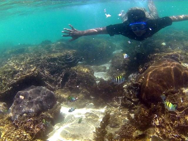 Pantai Kedung Celeng Malang Langkah Kecilku Biota Laut Kota
