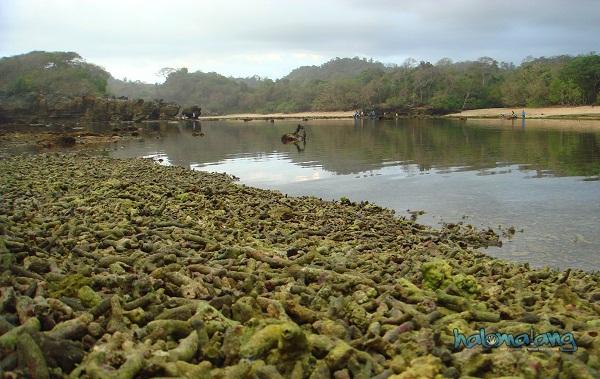 Ngalamsam Pantai Kondang Merak Kota Malang