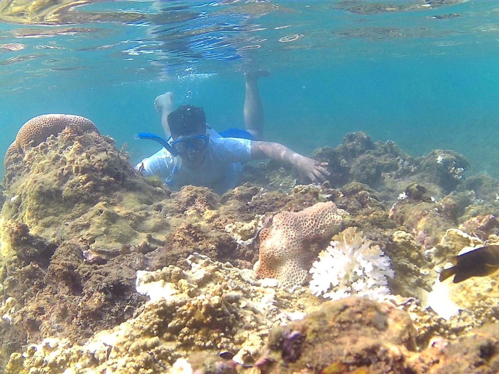 Pantai Kondang Merak Surga Bawah Lautnya Malang Langkah Kecilku Terumbu