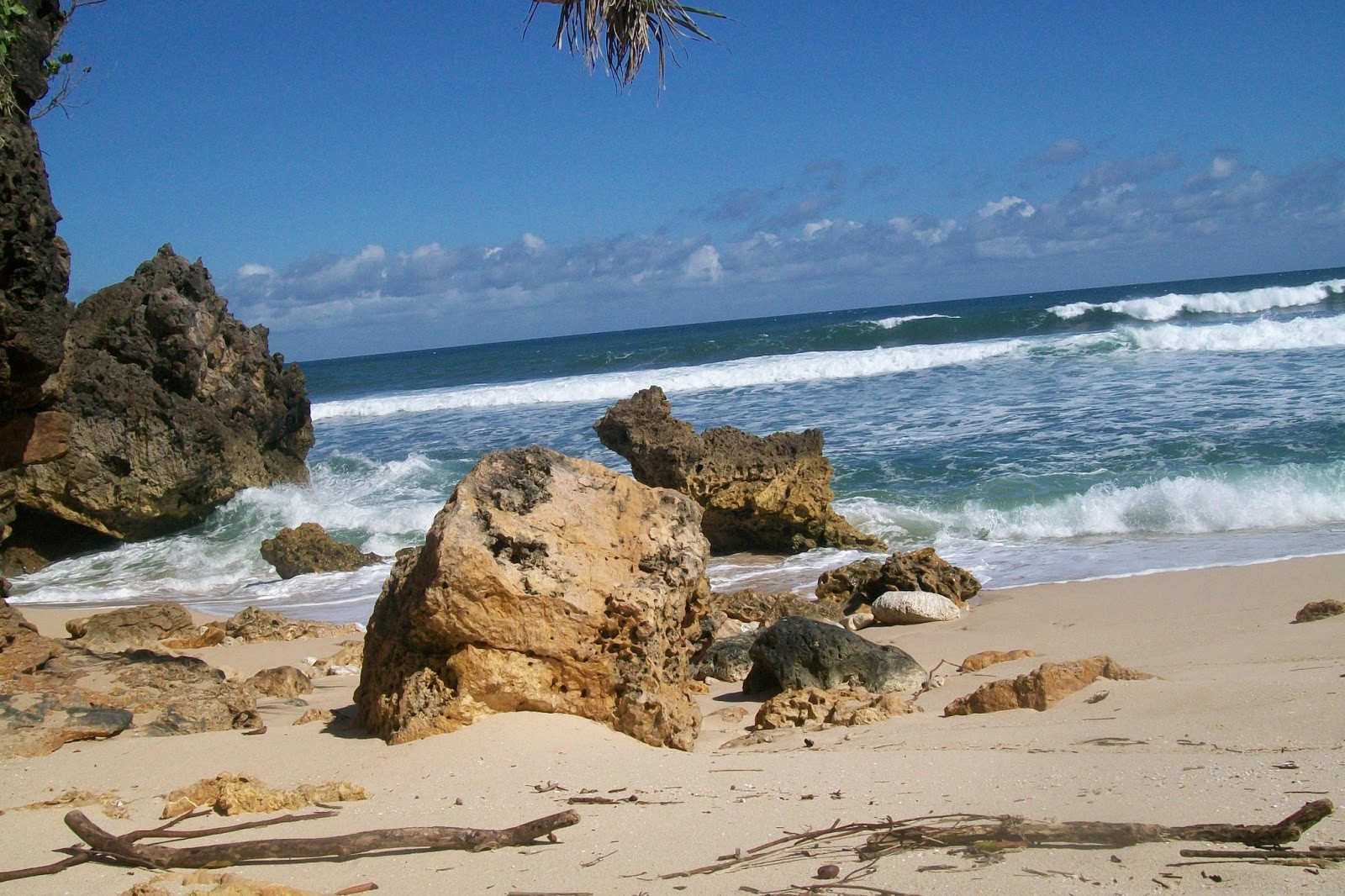 Program Kondang Merak Adoption Pantai Kota Malang