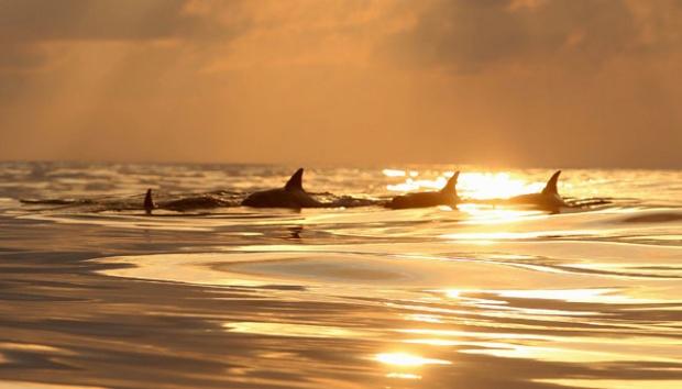 Wisata Pantai Sunset Tarian Lumba Laut Malang Travel Sekelompol Kondang