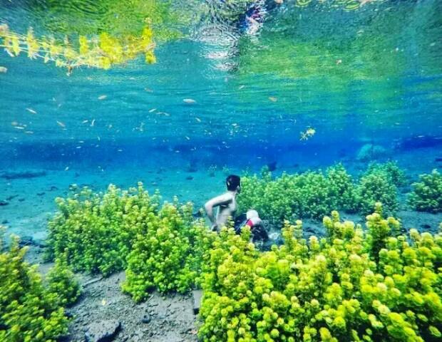 Mata Air Sumber Sirah Pesona Indah Surga Bawah Malang 3d2cc575853a0a8190650b02f7cc37b1