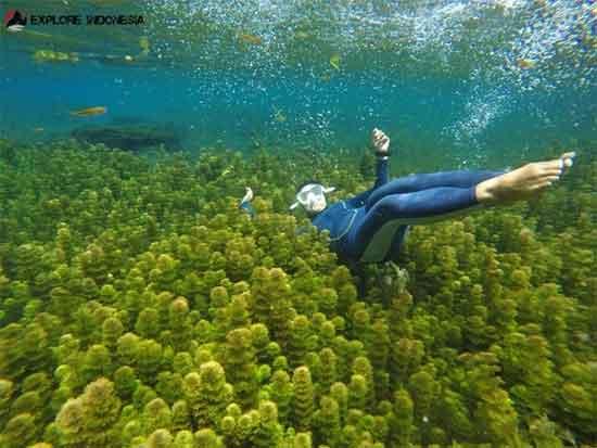 Menikmati Keindahan Kesegaran Ditawarkan Oleh Wisata Sumber Menyelami Beningnya Air