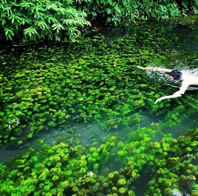 Sirah Spot Snorkeling Air Tawar Seru Malang Foto Sumber Kota