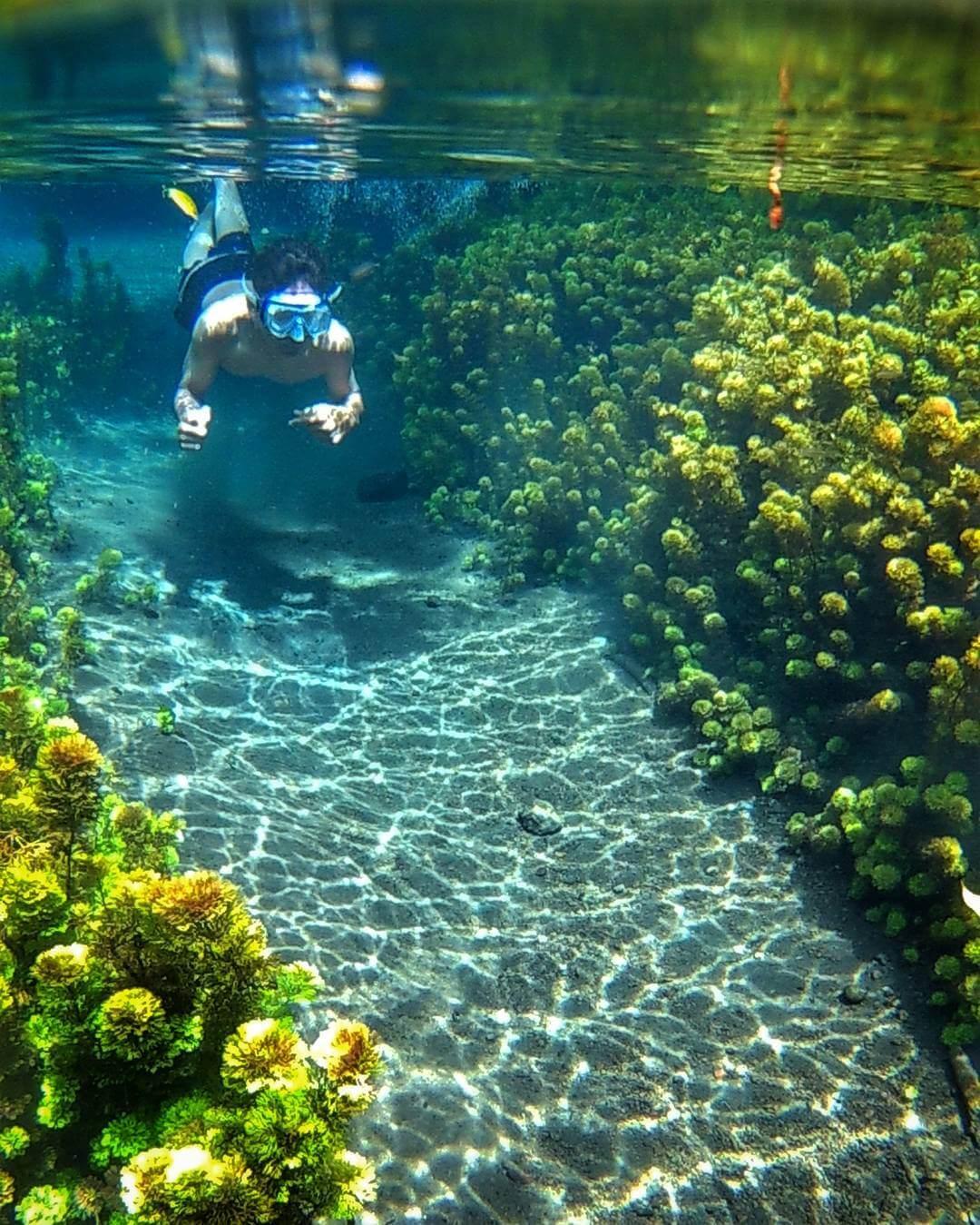 Sumber Sirah Gondanglegi Malang Surga Bawah Air Bening Kota