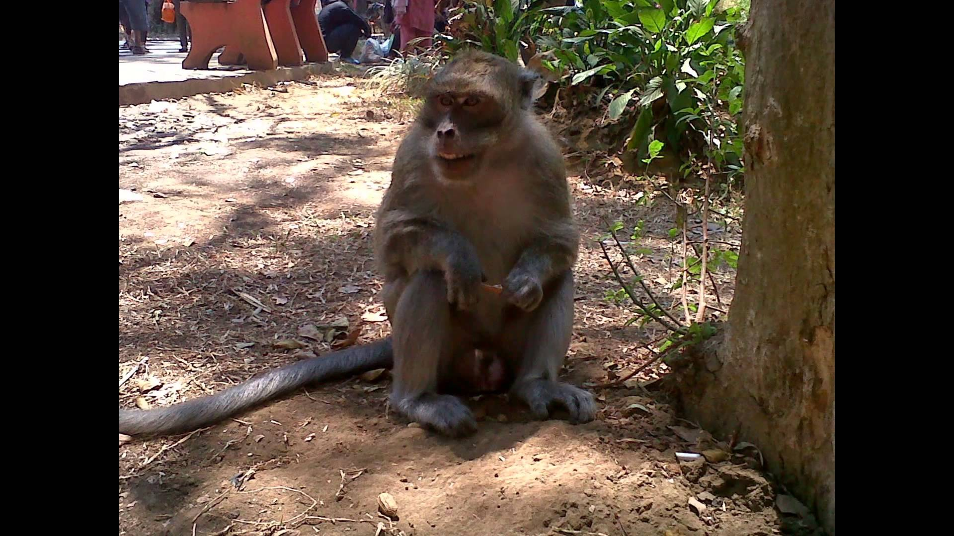 Taman Wisata Air Wendit Jawa Timur Tempat Indonesia Youtube Kota
