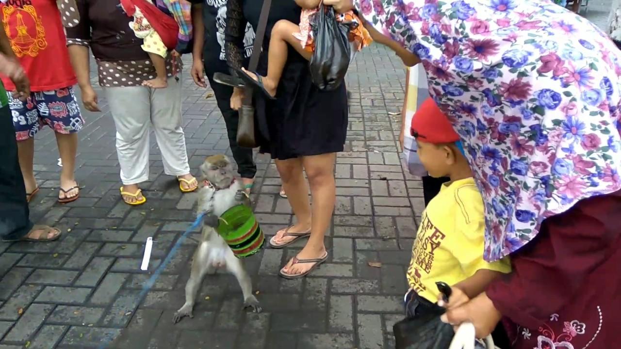 Taman Wisata Air Wendit Malang Liat Monyet Edisi Liburan Youtube
