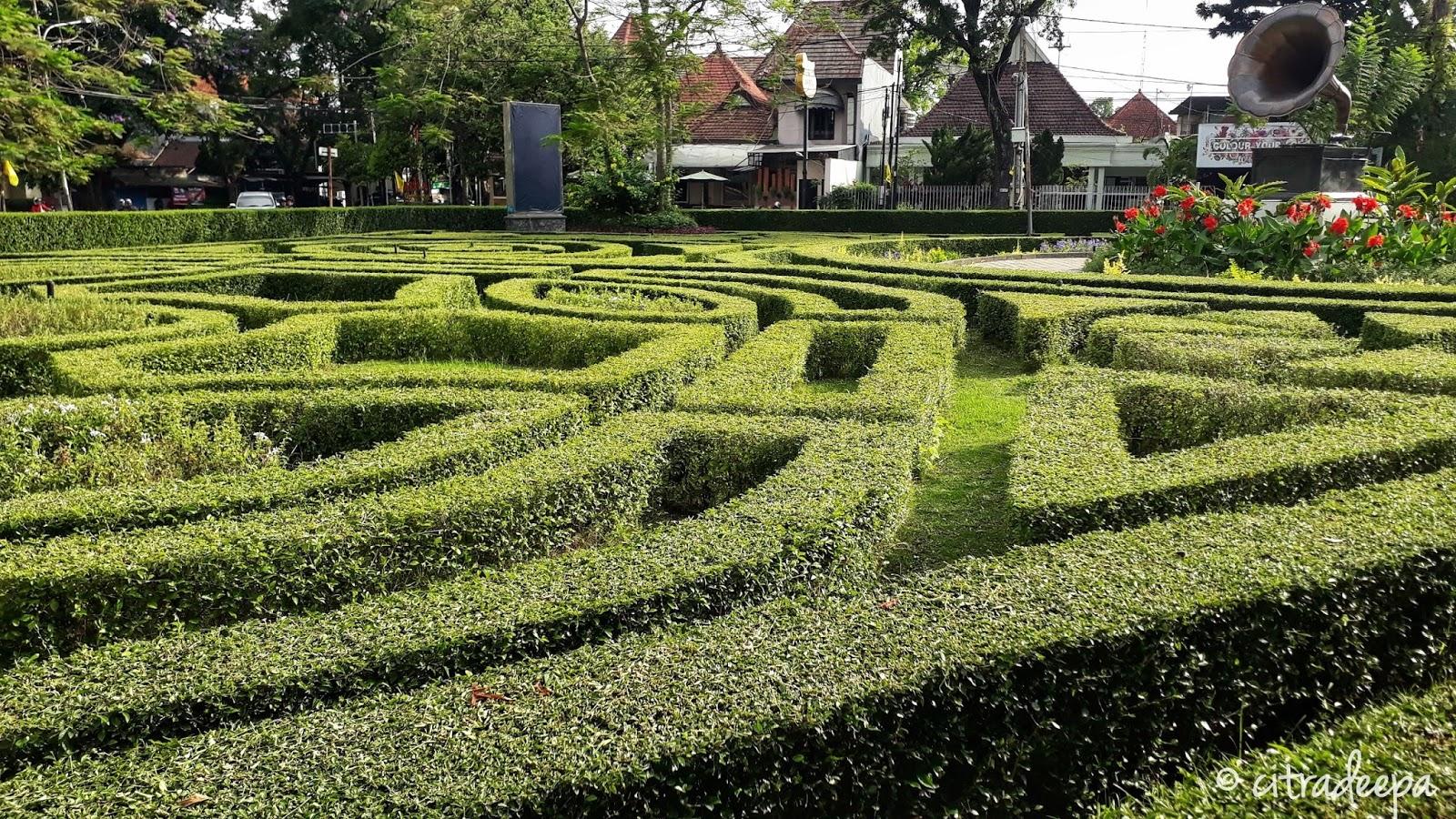 Taman Terompet Malang Day 5 Dandelions Bikin Tambah Nyenengin Liat