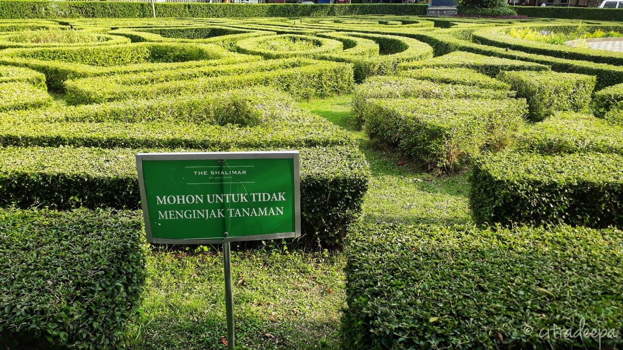 Taman Terompet Malang Day 5 Dandelions Sebenernya Enak Lho Kalo