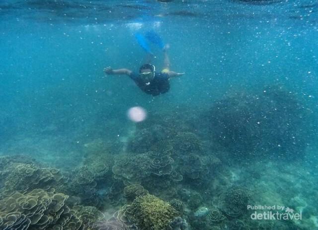 Teluk Kletekan Surga Snorkeling Kabupaten Malang Memiliki Air Tenang Airnya