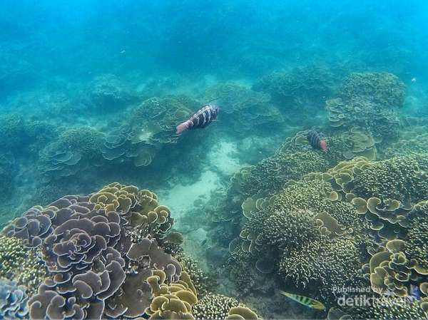 Teluk Kletekan Wisata Bawah Laut Malang Backpacker Jakarta Foto Travel