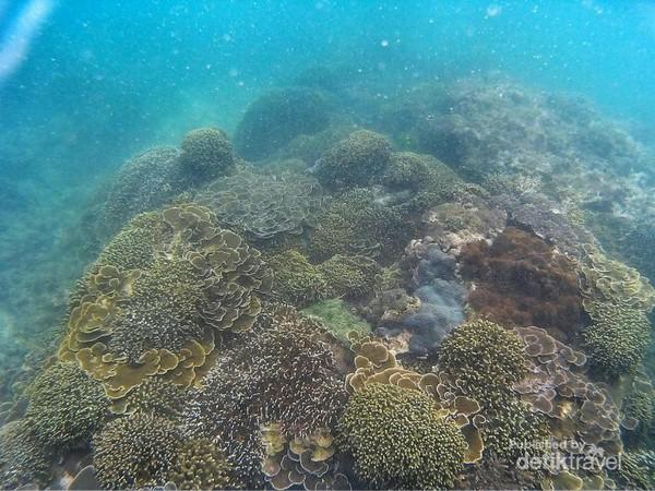 Tempat Snorkeling Asyik Malang Pesona Terumbu Karang Bawah Laut Teluk