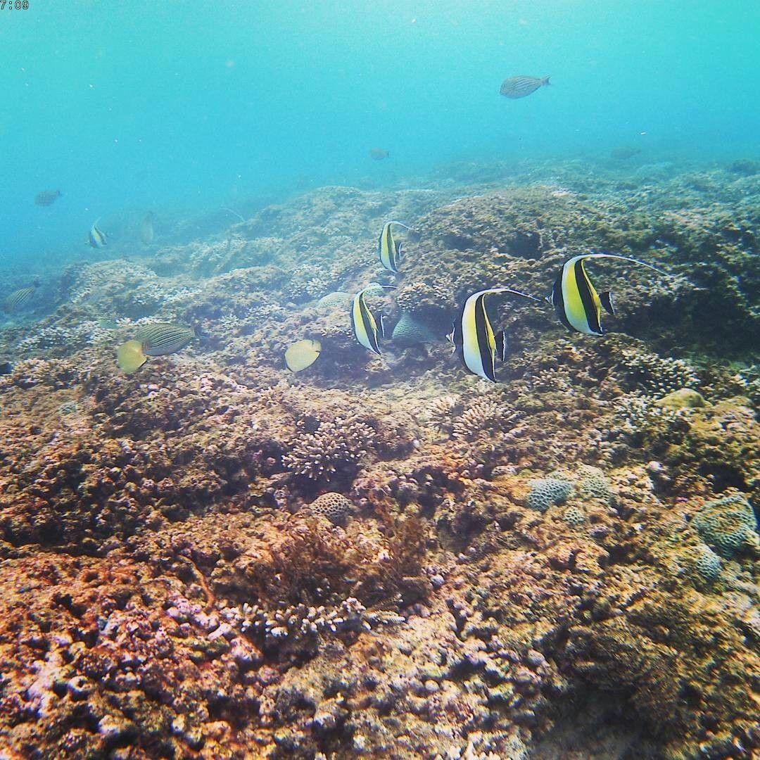 Wisata Surga Bawah Laut Kabupaten Malang Cocok Buat Cantiknya Ikam