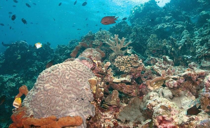 Pulau Siladen Surganya Ketenangan Manado Baswara Panorama Bawah Laut Diveindonesia