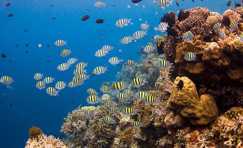 Pulau Siladen Surganya Ketenangan Manado Baswara Terumbu Karang Cantik Bawah