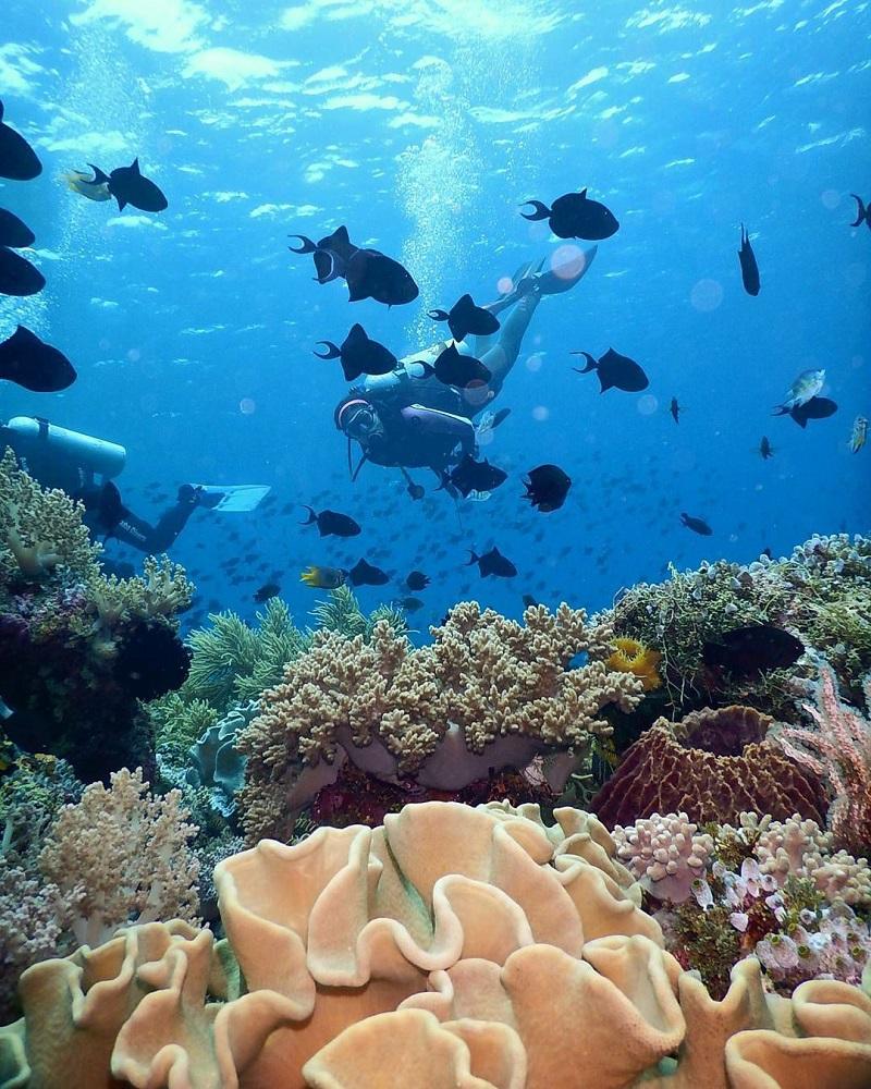 Siladen Surga Tak Terlupakan Keindahan Wiisata Bawah Laut Underwater Resort