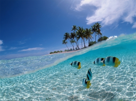 Wakil Walikota Kunjungi Pulau Siladen Suara Manado Pantai Lihaga Minahasa