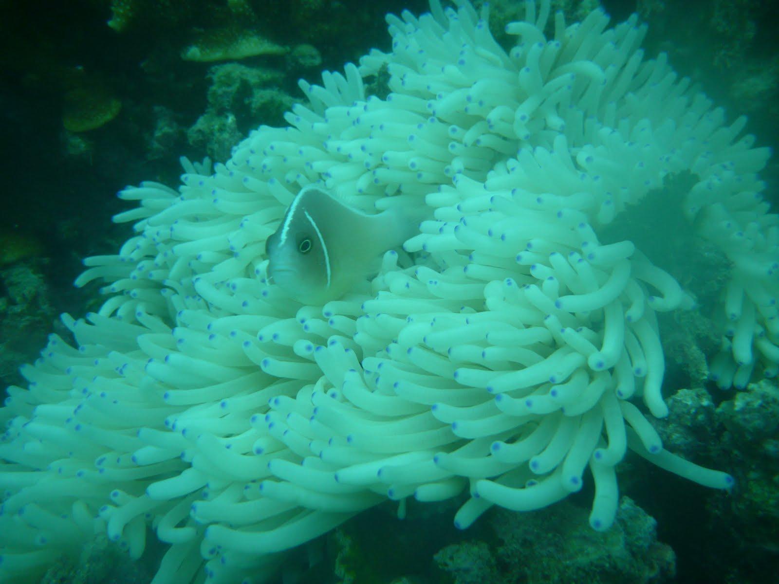 Candz Keindahan Taman Laut Bunaken Nasional Disekitar Pulau Berada Disebelah