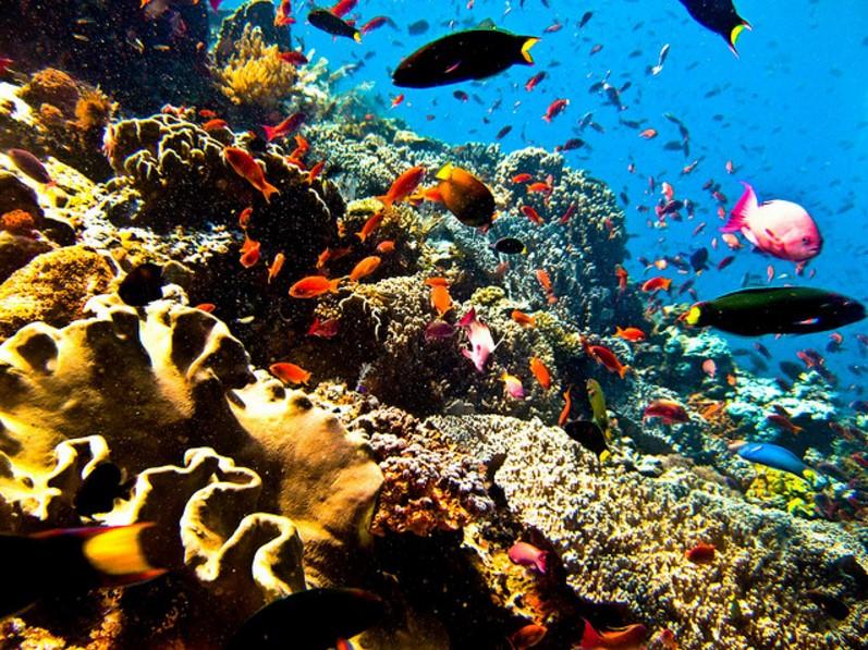 Daya Tarik Taman Laut Bunaken Manado Kota