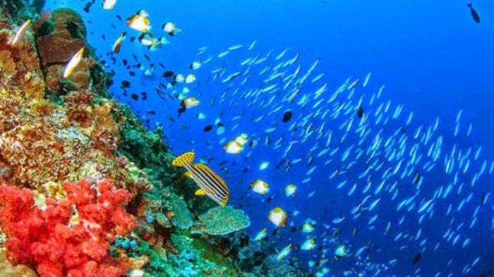 Dikenal Sebagai Spot Diving Kelas Dunia Inilah 10 Fakta Taman