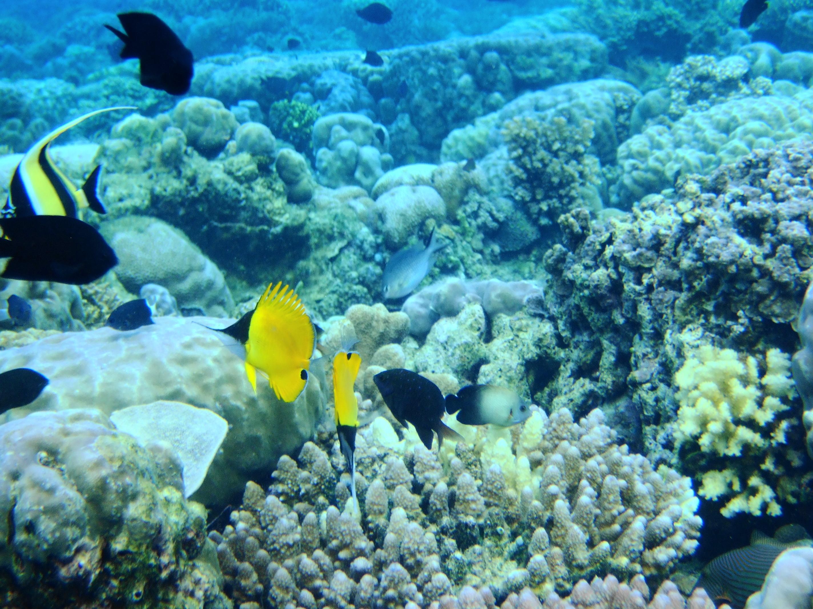 File Bunaken Marine Park Jpg Wikimedia Commons Taman Laut Kota