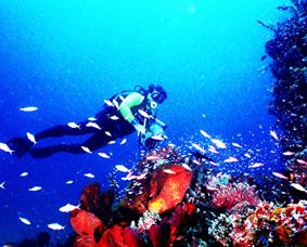 Keindahan Alam Tempat Objek Wisata Taman Laut Nasional Bunaken Manado