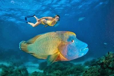 Keindahan Taman Bawah Laut Bunaken Manado Wisatania Menyelam Kota