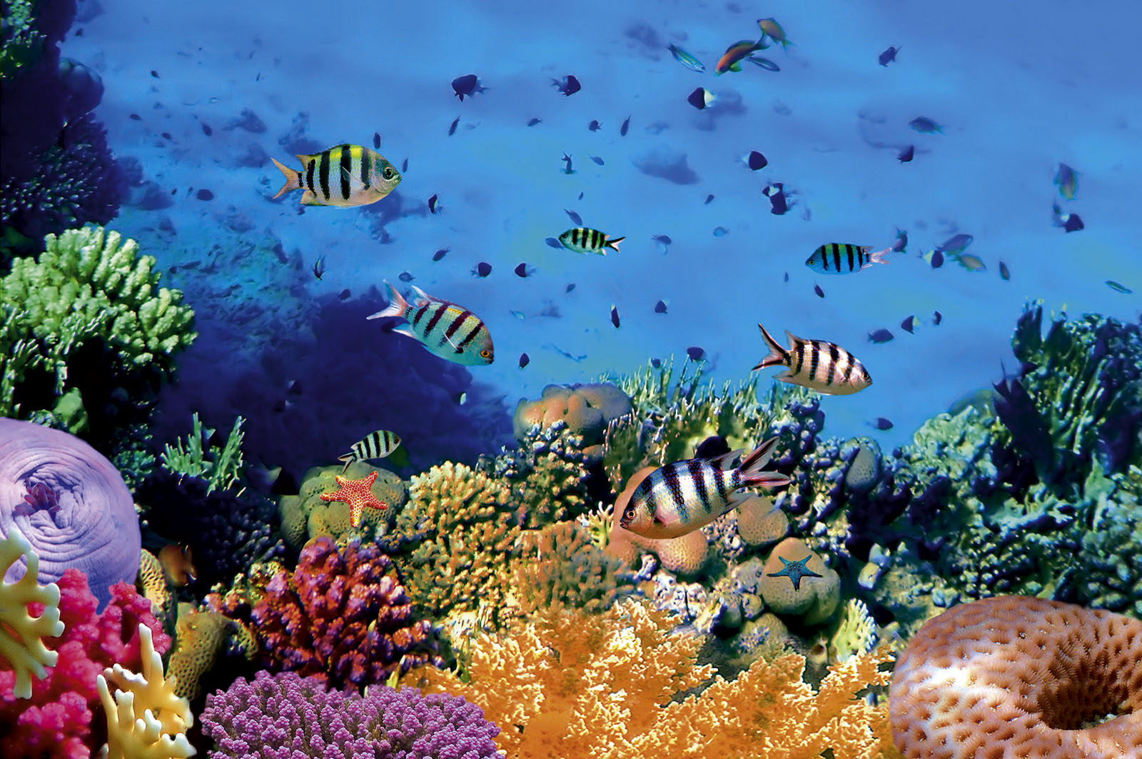 Limakaki Fakta Keunikan Taman Laut Bunaken Kamu Tahu Kota Manado