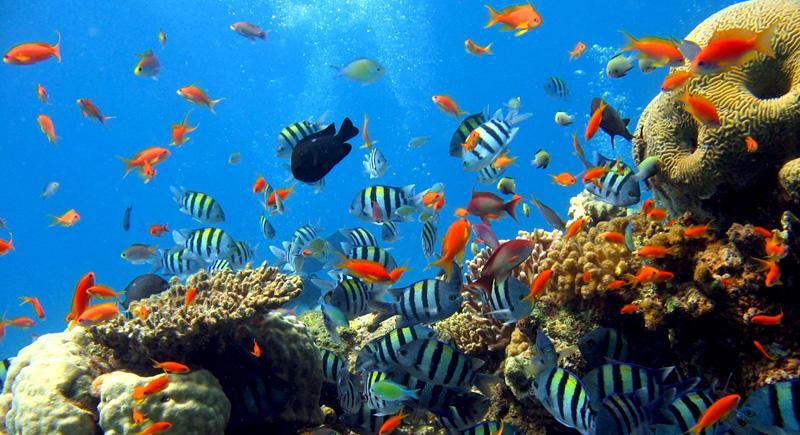 Limakaki Keunikan Taman Laut Bunaken Wajib Diketahui Kota Manado