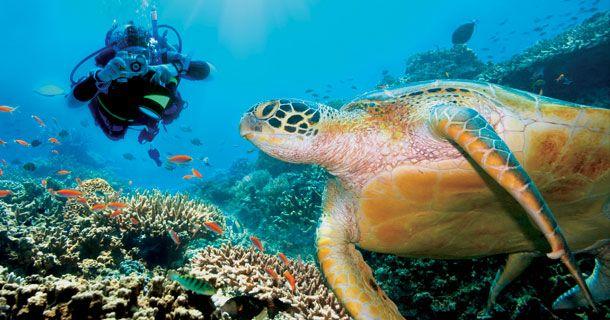 Menikmati Taman Laut Terindah Dunia Bunaken Berita Terkini Keindahan Bawah