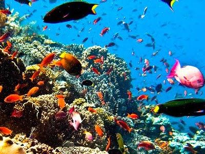 Objek Wisata Taman Nasional Laut Bunaken Manado Kota