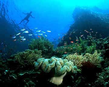 Pengelolaan Bunaken Wisata Nusantara Sesuai Taman Laut Kota Manado