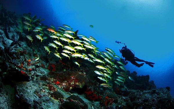 Profil Kota Manado Sulawesi Utara Kecil Mempesona Taman Laut Bunaken
