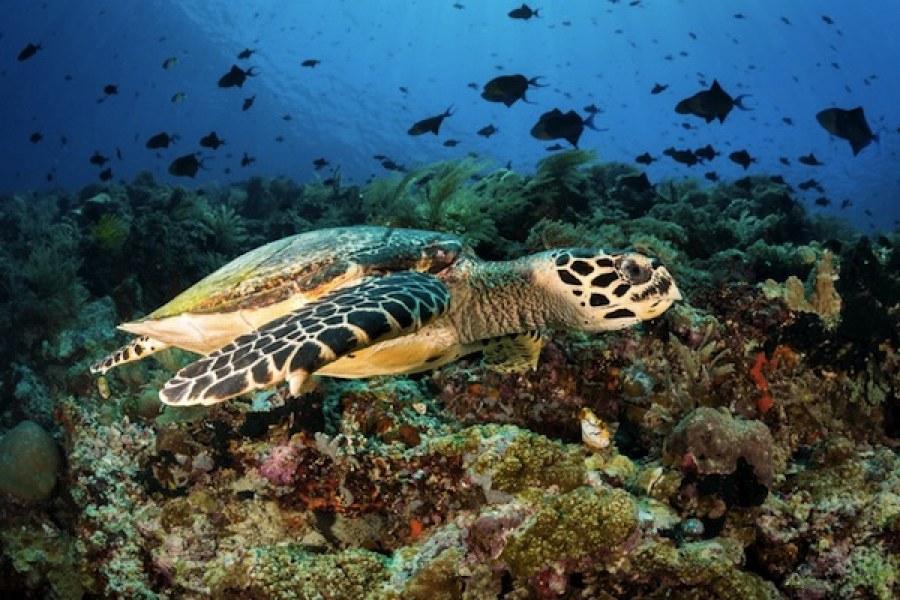 Sambangi Bunaken Salah Satu Taman Laut Terindah Dunia Kota Manado