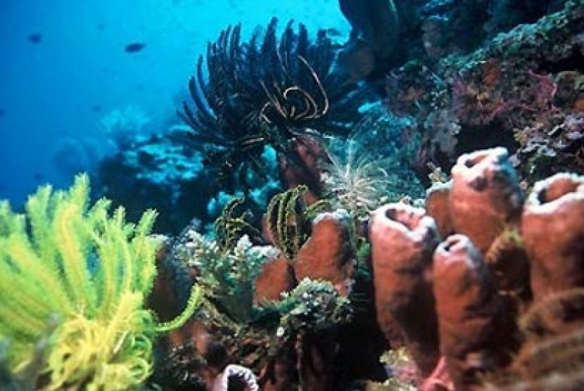 Sampah Plastik Rusak Ekosistem Taman Laut Bunaken Republika Online Terumbu