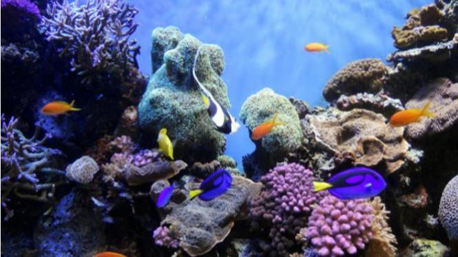 Sejuta Pesona Taman Laut Bunaken Viva Image Title Kota Manado