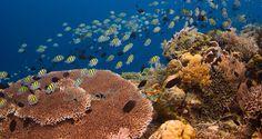 Sekitar Pulau Bunaken Terdapat Taman Laut Melhores Lugares Mundo Fazer