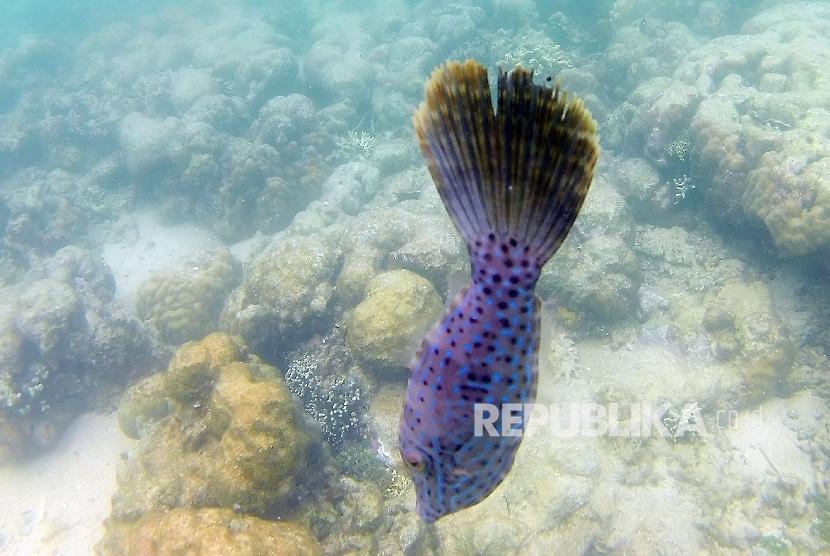 Surga Bahari Bunaken Pengembangan Wisata Taman Laut Kota Manado Provinsi